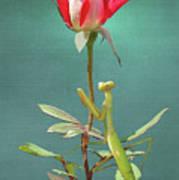 Guardian Of The Rose Art Print