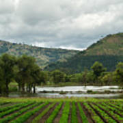 Guatemalan Nursery And Lake Art Print