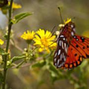 Gulf Fritillary Agraulis Vanillae Red Butterfly Art Print
