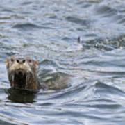Gulf Islands Otter Art Print