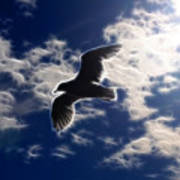 Gull Against Sky Fractal Art Print
