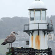 Gull And Lighthouse Art Print