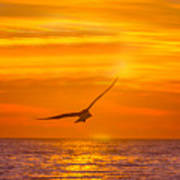 Gull At Sunrise Art Print