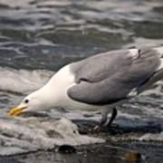 Gull At Surfs Edge Art Print