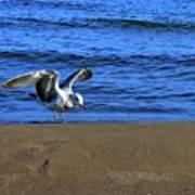 Gull On The Beach  Art Print