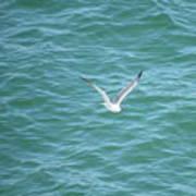 Gull Over The Gulf Art Print