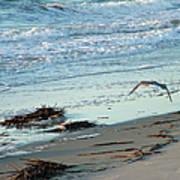 Gull Over Tybee Island Beach Art Print