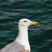 Gull Profile Art Print