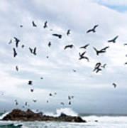 Gulls Of Carmel Art Print