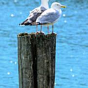 Gulls On Piling Art Print