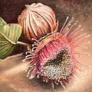 Gumnut And Flower Art Print