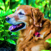 Gus In Flower Bed 10357t2a Art Print