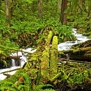Gushing Through Ferns And Forest Art Print
