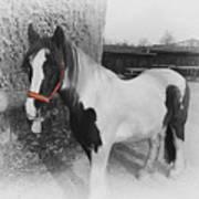 Gypsy Horse Art Print
