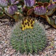 H D R Budding Cactus Art Print