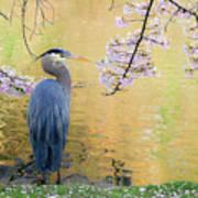 Haiku, Heron And Cherry Blossoms Art Print