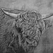 Hairy Highlander Bw Art Print