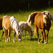 Halflinger Horses Art Print