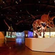 Hall Of Paleontology Art Print