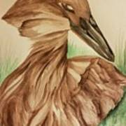 Hamerkop Art Print
