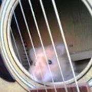 Hamster Strings Art Print
