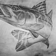 Hand Drawn Snook  Art Print