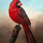 Handsome Cardinal Art Print