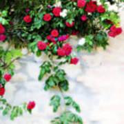 Hangin Roses Art Print