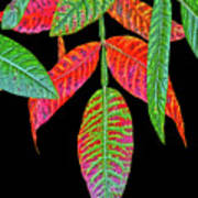 Hanging Green And Red Leafs... Art Print