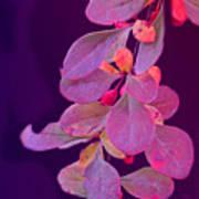 Hanging Purple Art Print