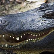 Happy Florida Gator Art Print