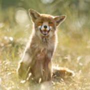 Happy Fox Is Happy Art Print