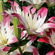 Happy Lilies Art Print