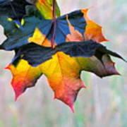 Harbinger Of Autumn Art Print by Sean Griffin
