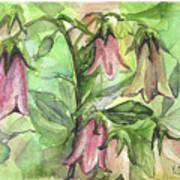 Harebell Art Print