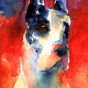 Harlequin Great Dane Watercolor Painting Art Print by Svetlana Novikova