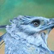 Harpy Eagle Two Art Print