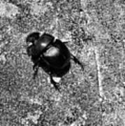 Harsh Life Black White Life Is Dung Beetle Card Art Print