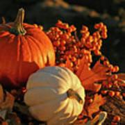 Harvest Colors Art Print