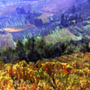 Harvest Time At The Vineyard Print by Elaine Plesser
