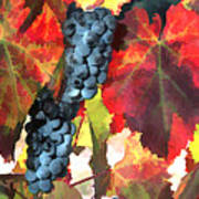 Harvest Time Grapes And Leaves Art Print