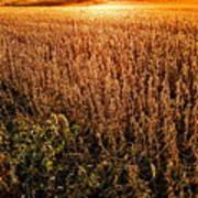 Harvest Twilight Art Print