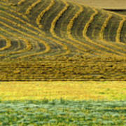 Harvested Fields Of The Palouse Art Print