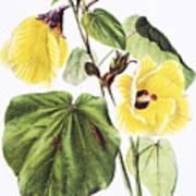 Hau Flower Art Art Print