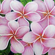 Hawaii An Tropical Plumeria Flower #338 Art Print