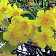 Hawaii Gold Tree Art Print