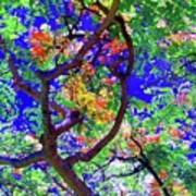 Hawaii Shower Tree Flowers In Abstract Art Print