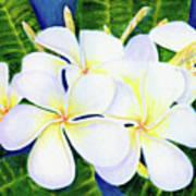 Hawaii Tropical Plumeria Flower  #208 Art Print