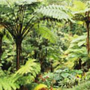 Hawaii Tropical Rainfores Art Print