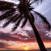 Hawaiian Coconut Palm Sunset Art Print by Dustin K Ryan